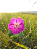 Wild and Fragile by Kevin-Welch