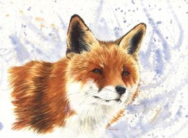 Fox II by saraquarelle