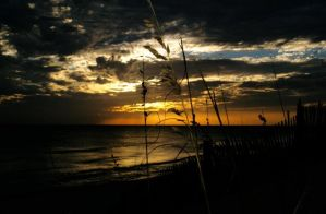Sea Oats By The Sea Shore. by FLG8TR