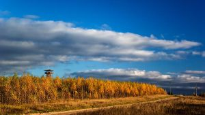 birches' shepherd by vonrubinstein