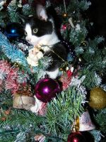 Kitty 1st Christmas by Melrainbow