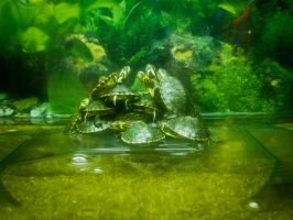turtles groups by Gundhardt