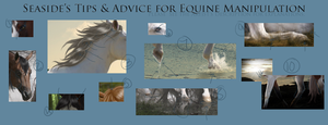 Horse Manipulation Tips by seaside6188168