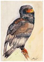 Bird is the Word by malta
