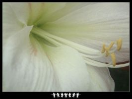 White Flower by Baz619