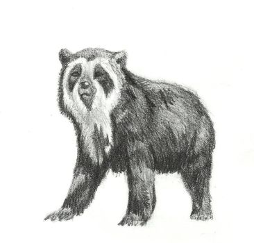 Spectacled Bear by DivorceDalek