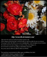 Daisies composition by Seraerith-stock