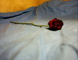 Wilting Rose 1 by XionKnightmare-Stock