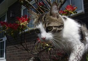 Cat in plantpot 1 by lmsmith