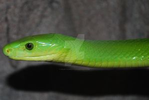 Portrait: Green Mamba 02 by ManitouWolf