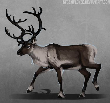 Blitzen by KFCemployee