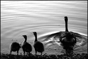 Family Shore by FramedByNature