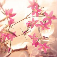Small Pink Flowers by Aeternum-Art