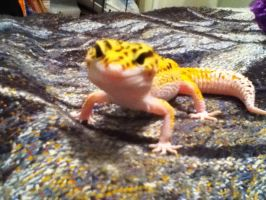 Abby_LeopardGecko#2 by Simply-Dreams