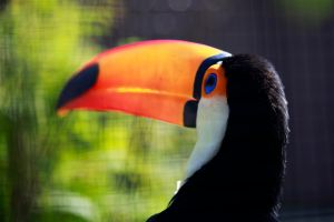 Tucan Bird by MrBlueSky1987