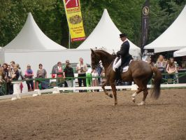Dressage Riding Piaffe by LuDa-Stock