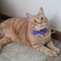Pretty in purple by lucytherescuedcat