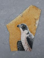 Falcon on stone by Nyotah