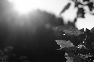 Sunny B/W by jointadventure