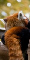 Bookmark : Firefox by darkcalypso