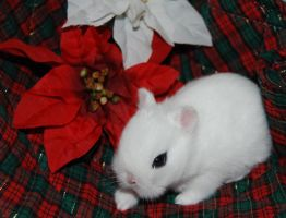 Have Yourself A Hotot Xmas by mirielthepiratelover