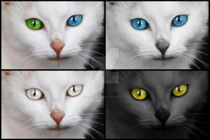 Mesmerizing Cat Eyes - Exclusive Stock Pack by somadjinn