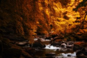 River Braan by Fox2006