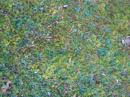 Texture - Moss by markopolio-stock