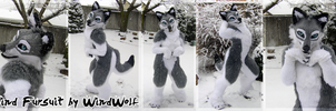 Semi-Realistic Wind Fursuit by WindWo1f