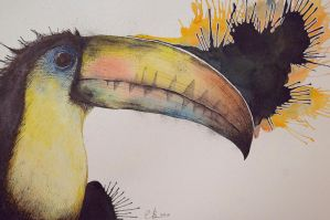 Toucan by eriksherman