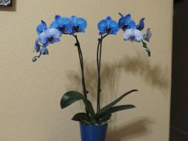 Blue Orchid - Stock 6 by CNLGraphics