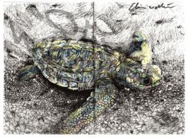 Baby Turtle Coloured by Ollie Walters by Digital-Goth