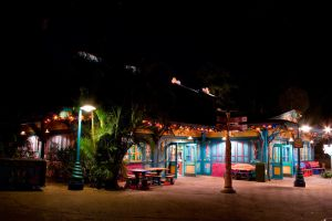 Animal Kingdom at Night 47 by AreteStock