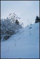 Winter Wonders IV by Eirian-stock