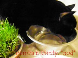 Pumba Is Thirsty GIF by FluffyMonkeyJr