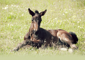 foal by NRHPhotography
