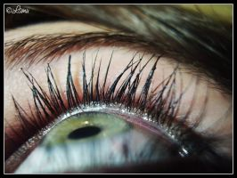 eyelashes by Lamu