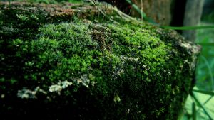 Moss by RicheliVargas