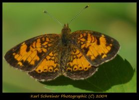Butterfly 2 by KSPhotographic