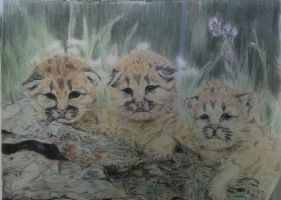 Mountain Lion Cubs by Zimriver
