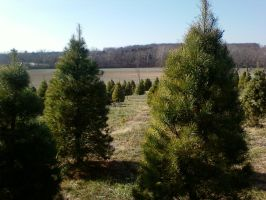 Tree Farm by Moskaluke