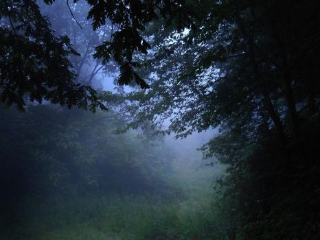 Fog in the forest by VesnaRa-14
