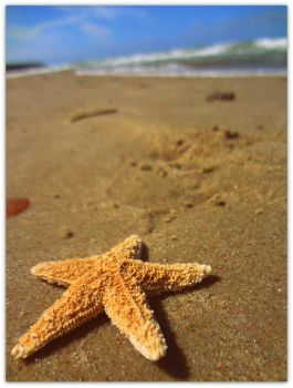 a star of the water by NinaEberhard