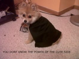 Cujo the Sith Lord with caption by niki1313