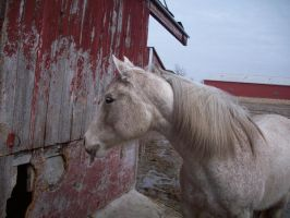 Red barn, begging horse by BloodStainedSilk
