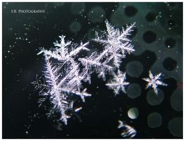Snowflakes by selley