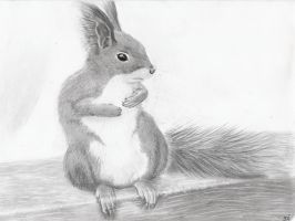 Squirrel by Ajehandra