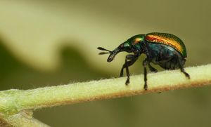 Insect 3 by mateuszskibicki1