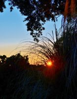 Sunset through the Bush Brooms by Marilyn958