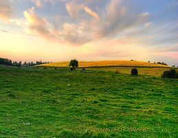 Yellow hill hdr by pjs15204
